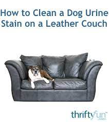 dog urine stain on a leather couch