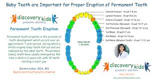 Which Baby Teeth Fall Out Chart Permanent Tooth Eruption Pediatric Dentist In Frisco