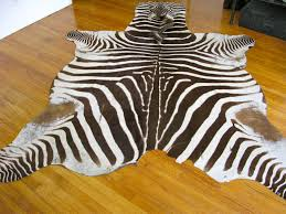 decor home decoration ideas with zebra rug in real hide