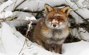 Image result for wintry animal scene