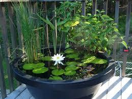 container water garden. Unique Garden Intended Container Water Garden