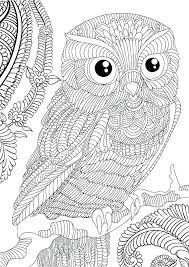 coloring book owl secret garden colouring pages of owls together with plus best