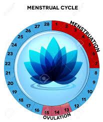 Menstrual Cycle Chart Average Twenty Eight Menstrual Cycle Days