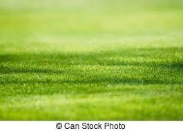 grass field background. Green Grass Field Background - Sunny Field. G