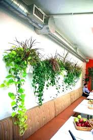 plant holders for wall wall mount plant hangers wall mounted plants wall mounted planters an office