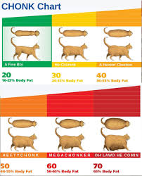 Chonk Chart Poster Identifying Chonk Absolute Units Poster Absoluteunits