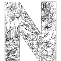 Small Picture Animals and Plants Alphabet Coloring Pages Surfnetkids