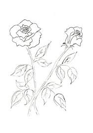 Small Picture 240 best Flowers drawing of rosa images on Pinterest Drawings