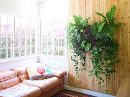 decorative plants for office. Living Room Beautiful Plant Decoration In Decorative Plants Indoor Cool Best For Office