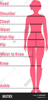 Woman Size Chart Vector Photo Free Trial Bigstock