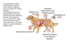 Resultado de imagen para garrapatas en perros