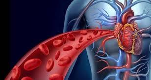 غذاء نموذجي لصحة القلب والأوعية الدموية – بوابة الخبر الالكترونية