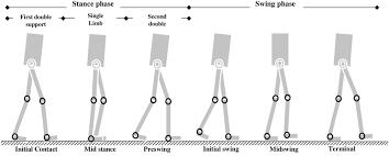 walking journal walking phases https doi org 10 1371 journal pone 0200193 g002