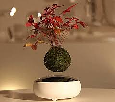 the air bonsai is a floating bonsai tree that uses magnets to hover in place bought bonsai tree