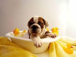 Resultado de imagen de baño de perros
