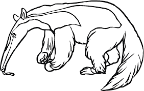 Small Picture Free AnteaterColoring Pages