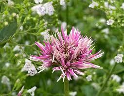 What's in Bloom in August - Toronto Botanical Garden