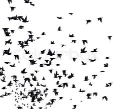 birds flying in the sky silhouette.  Birds A Flock Of Migratory Birds Set Black Silhouettes Birds Flying In The  Sky Isolated On White Background  Stock Photo Colourbox Inside Birds Flying In The Sky Silhouette L