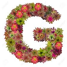 letter g letter g in flowers norwood ma florist