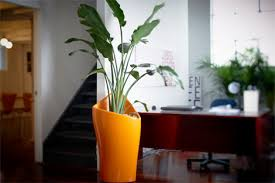 tall office plants. Office Plants Catalogues From Ambius Tall