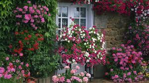 free flower garden wallpapers. Brilliant Garden Flower Garden High Definition For Free Wallpapers R