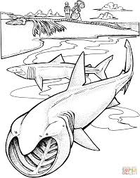 Small Picture Two Basking Sharks coloring page Free Printable Coloring Pages