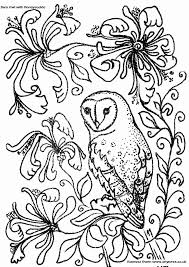 Small Picture Barn Owl Coloring Page