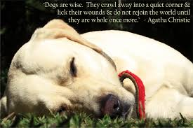 Dog Passing Quotes Fascinating Dog QuotesSayings