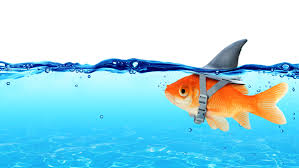 ways to safeguard yourself from job phishing scams uc davis illustration of a goldfish swimming under the surface a shark s fin attached to the top