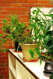 perfect office plants. Good Office Desk Plants Perfect Indoor Best For The Environment Cubicle R