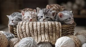 5 consejos para cuidar gatitos bebés - TqPets - Pronaca