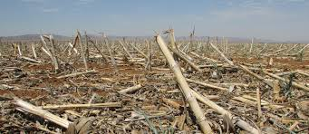 food production companies affected by drought i agriorbit the severe drought affecting south africa is looming over food producing companies large and small