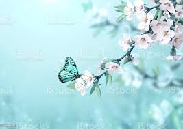 Beautiful Magic Spring Scene With Cherry Flowers And Butterfly Stock Photo  - Download Image Now - iStock
