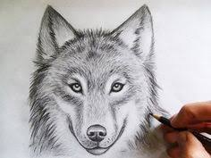 gray wolf face drawing. Interesting Drawing Wolf Drawing Inside Gray Face I