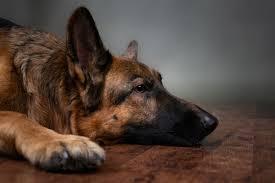 dog throwing up undigested food mon