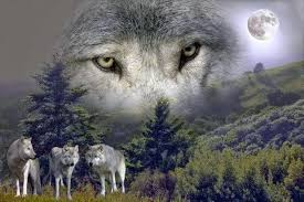 Women Who Run With The Wolves Quotes Extraordinary White Wolf Women Who Run With The Wolves Video