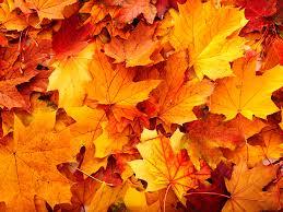 Free download Autumn Leaves Tumblr ...