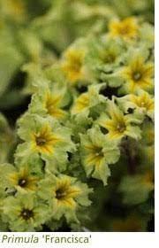 Gardening features from Crocus.co.uk - Rosette plants in the autumn garden