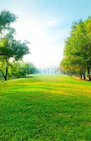 Beautiful morning light in public park with green grass field and