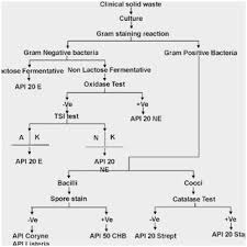 17 Paradigmatic Bacterial Identification Flowchart