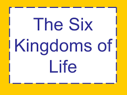 The Six Kingdoms Of Life Ppt Video Online Download
