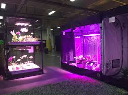 Growing Orchids Under Led Lights Hps Diamond Direct Led High Power Grow Lights