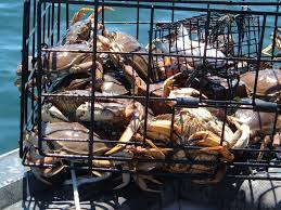 a complete guide to dungeness crabbing in the northwest