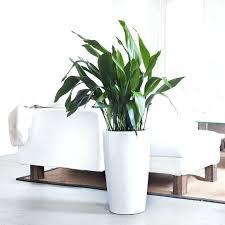 office plants no light. Low Light Office Plants No H