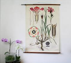 Dianthus Vintage Botanical Wall Chart Homegirl London