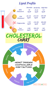 What Are The Good Cholesterol Numbers What Causes High