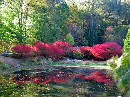 pond with brilliant fall color brookside gardens wheaton maryland by paul mcclure
