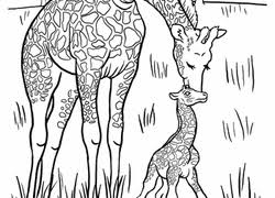 Giraffe Coloring Pages Printables Educationcom