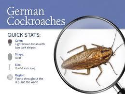 bella cockroach control