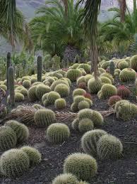 cactus gardens. cactus gardens s
